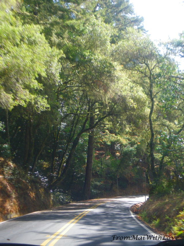 On the way to Muir Woods